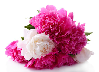 Beautiful pink and white peonies, isolated on white