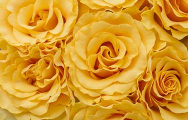 Close up bouquet of orange roses