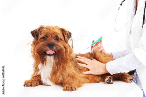 Vet dog and injection