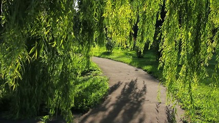 Footpath and weeping willow in the park.
