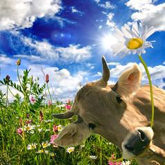 Alles Liebe zum Geburtstag: Kuh schenkt eine Blume :)