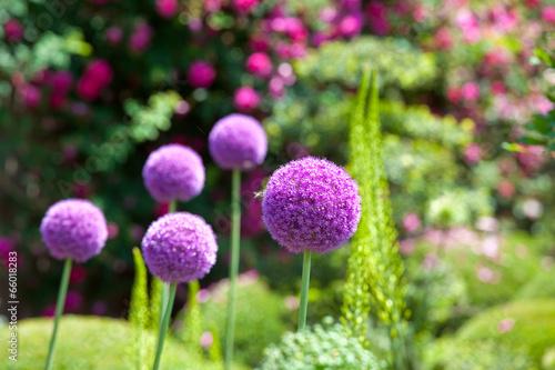 Staande foto Tuin Jardin et fleur sauvage