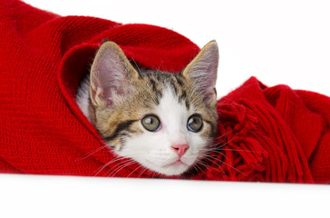 cute kitten playing with a red scarf