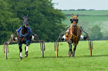 Trotting Race Synod Inn Cardigion