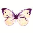 butterflies design - 66020252