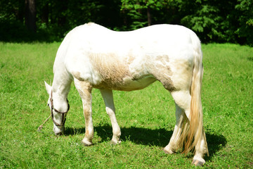Purebred horse outdoors