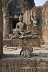 Молодая обезьяна в старинном храме.Таиланд