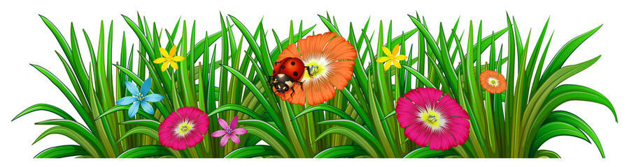 A garden with a blooming flowers and a ladybug