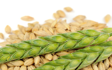 Green Ears and Barley Grains Close-Up