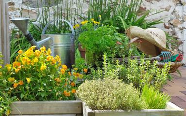 plantes aromatiques et jardinage