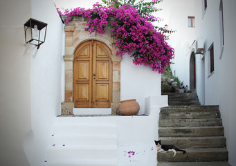 In Greece: white walls, fuchsia flowers, stairs and cat relaxing
