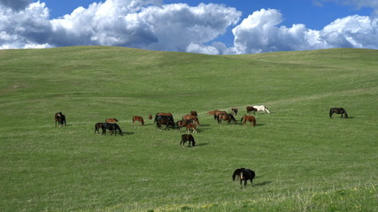 Grazing Herd