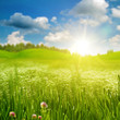 Summer morning on the meadow, abstract environmental backgrounds