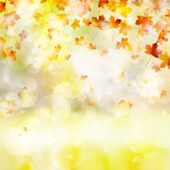 Autumn background with leaves. EPS 10
