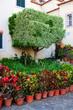 Madeira Town Garden