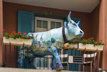 cow on the balcony