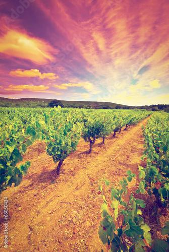 Vineyard © George