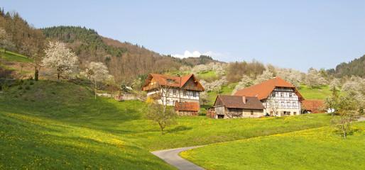Frühling im Renchtal, Schwarzwald