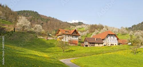 Frühling im Renchtal, Schwarzwald - 66053683