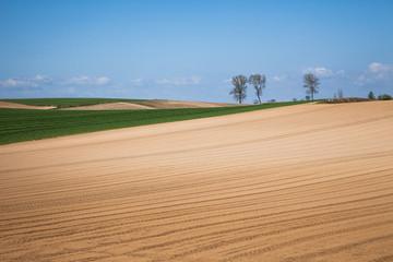美瑛の丘の畑と木々
