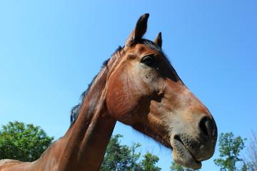 Kopf eines Pferdes, das in einer Koppel steht