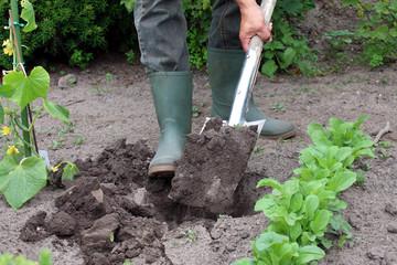 Mann in Gartenoutfit gräbt Pflanzloch in Garten
