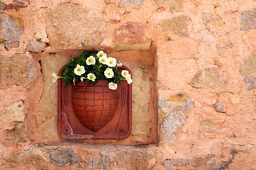 Blumen auf Kreta