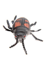 plastic beetle toy (bug)