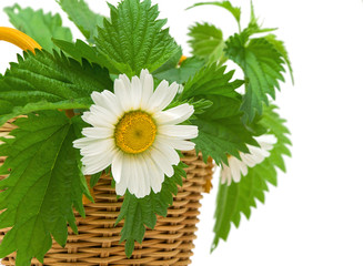 nettle and chamomile flower in a basket on white background
