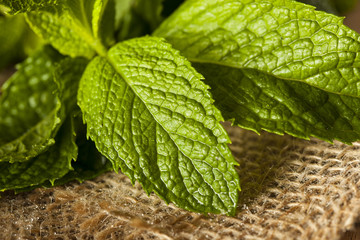 Organic Green Mint Leaf
