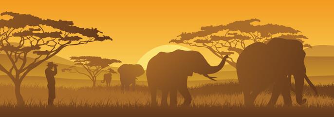 Elefanten unter Beobachtung