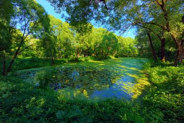 Overgrown pond landscape