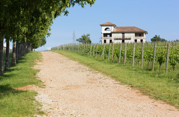 Country Lane Beside a Vineyard