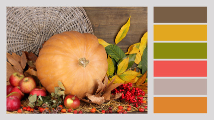 Autumn still life with pumpkin. Color palette with
