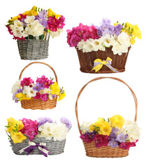 Collage of beautiful  freesias in basket, isolated on white
