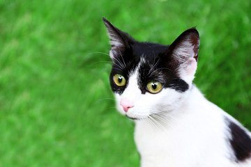 Cute cat on green background