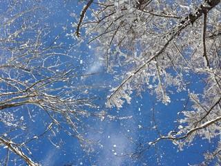 快晴の日の従雪