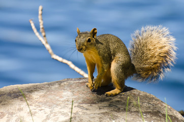 Cute Little Squirrel Resting on a Rock