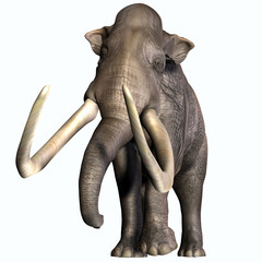 Columbian Mammoth Front Profile