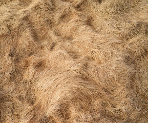 Hay texture background
