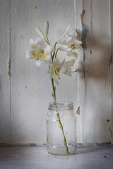 twig white lily in a glass jar