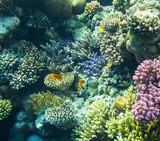 Coral reef - 66078676