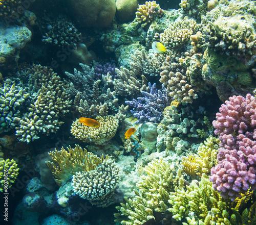 Fototapeta Coral reef