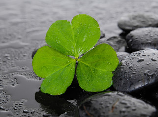 Still life with Shamrock leaf with wet stones