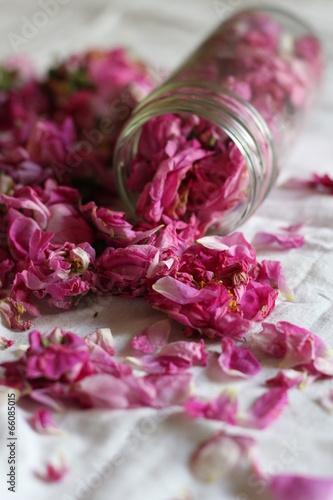 Leinwandbild Motiv Чайная роза