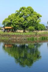 上江津湖の風景