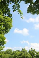 blauer Himmel mit Blätterrahmen