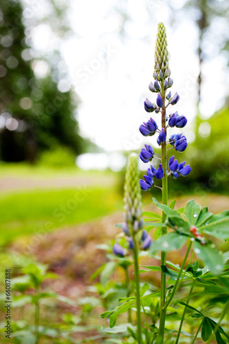 canvas print picture Wildflowers