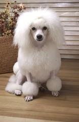 귀여운 애완동물