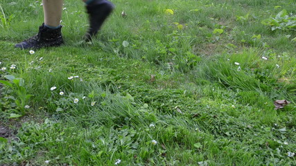 lawn with daisy flowers and gardener lawn cutter mower cut grass